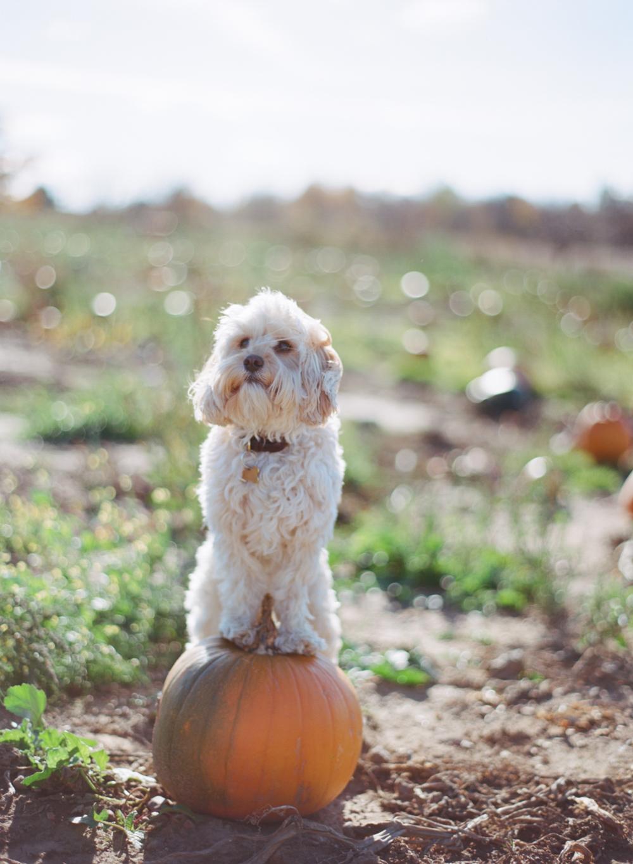 Wausau_WI_Pumpkin_Apple_Orchard_006.jpg