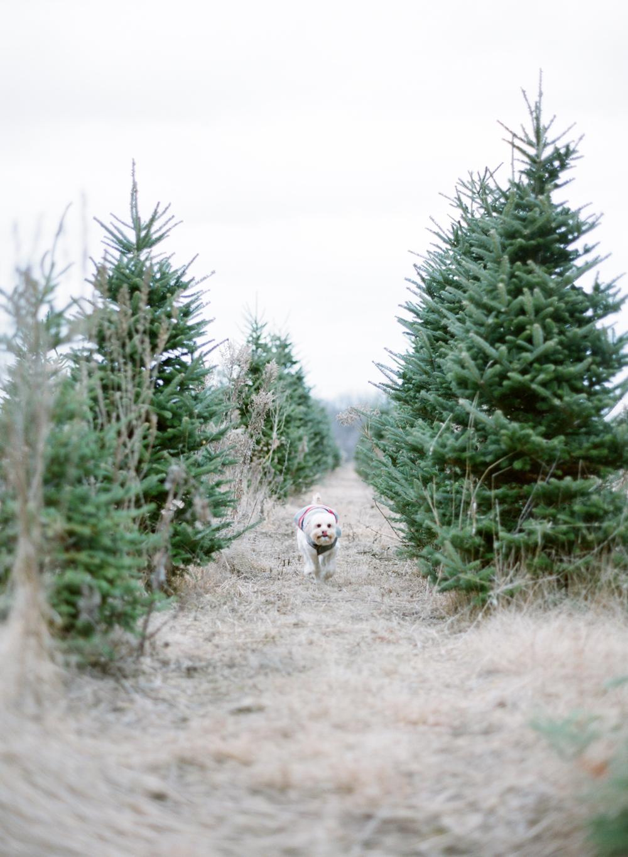 Christmas-Tree-007.jpg