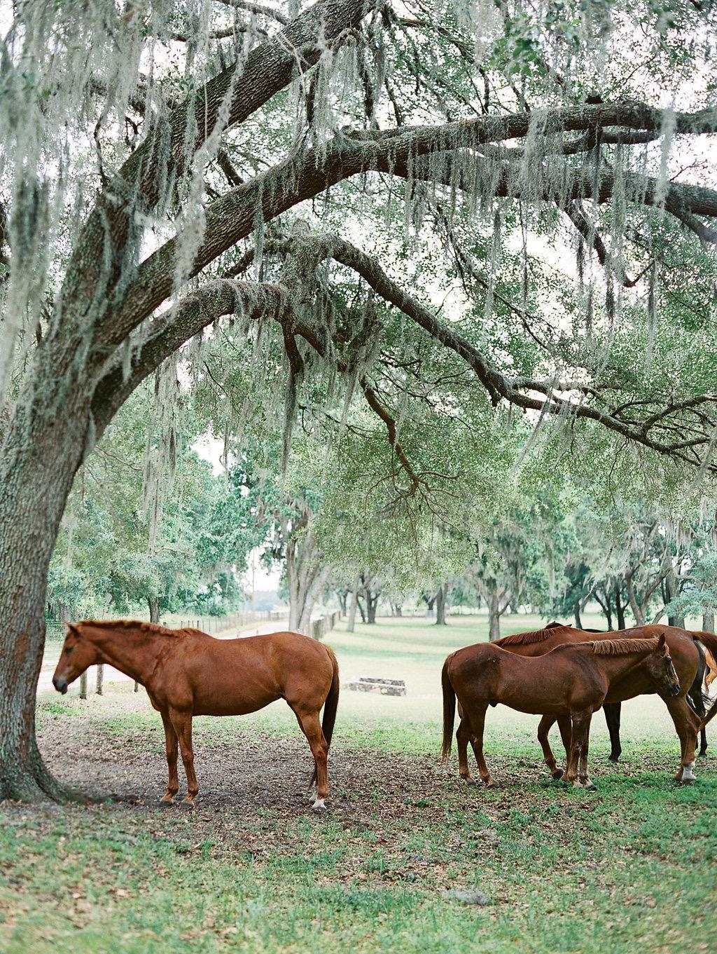 Bloom_Florida-1158.jpg