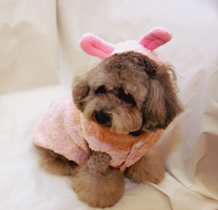 A-Dog-In-A-Pink-Bunny-Costume.jpg