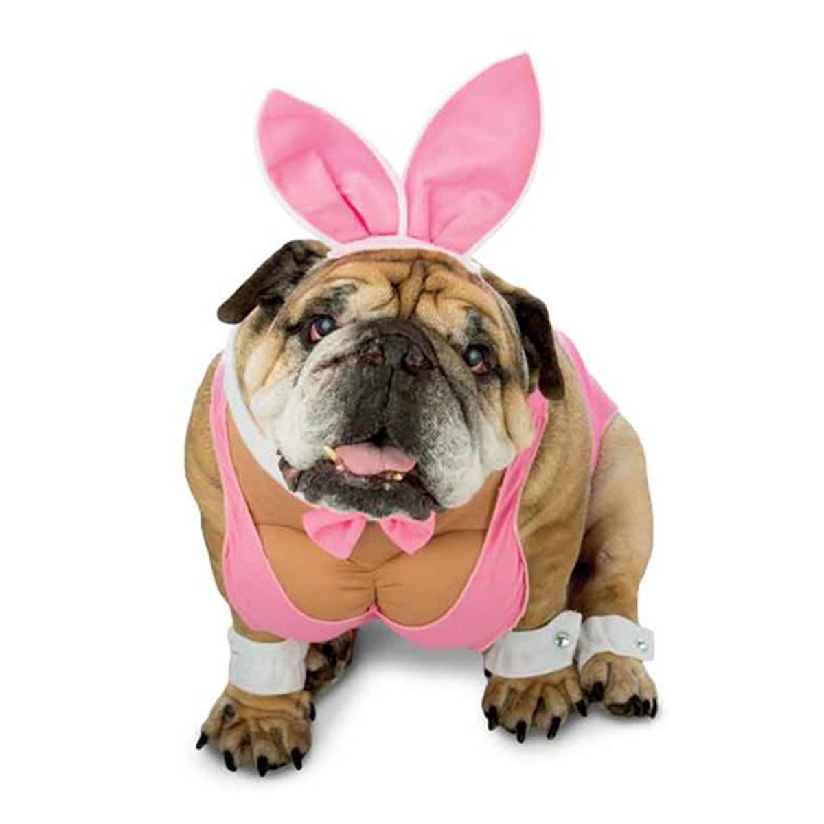 zelda-hunny-bunny-halloween-dog-costume-1.jpg