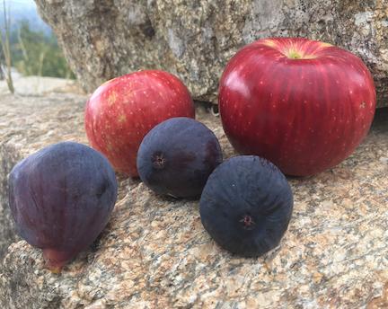 apples_figs.jpg