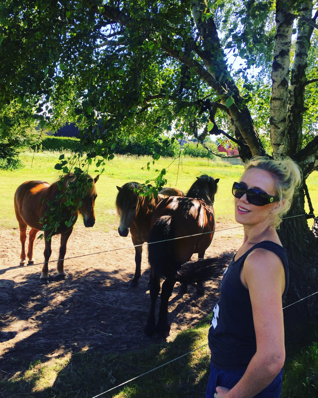Hästar.JPG