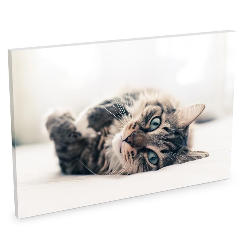 Foto su tela - Le tele foto piena sono un complemento d'arredo unico e originale per casa e ufficio. Stampale con i tuoi foto ricordi più belli per riempire di colore ed emozioni le tue pareti.Questa tela consente di inserire una foto€ 27,90 per il formato 20x30€ 39,90 per il formato 30x40€ 61,90 per il formato 50x70€ 94,90 per il formato 70x100€ 124,90 per il formato 50x140