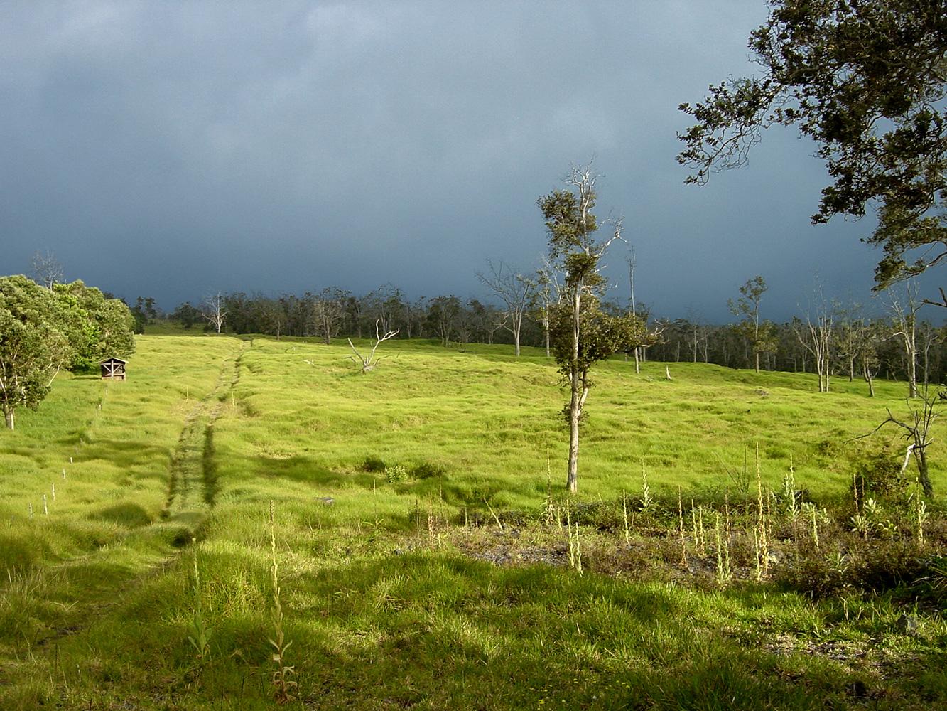 reforestation-pasture-line.jpg
