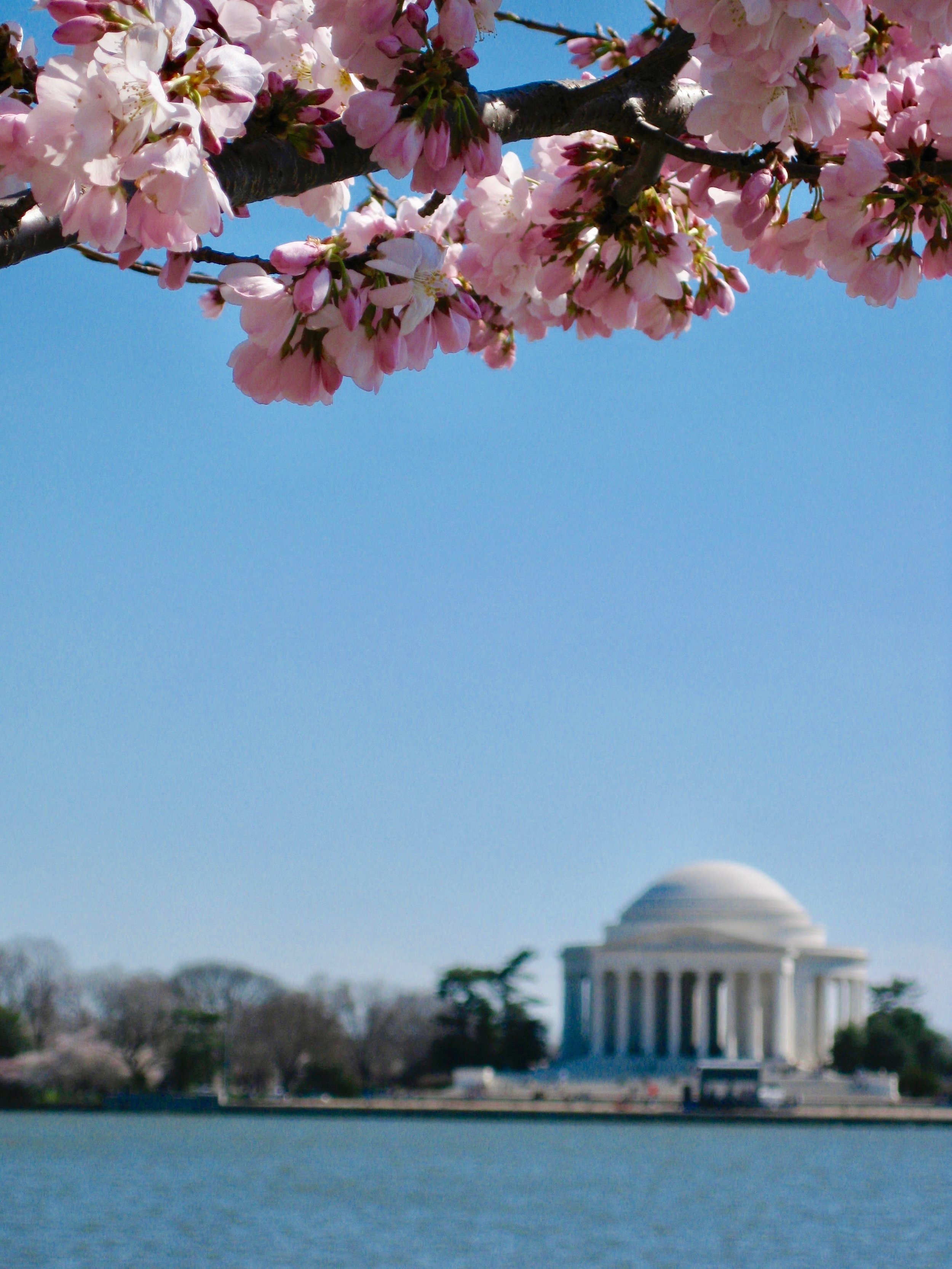 I love me some tidal basin during the Cherry Blossom Festival.