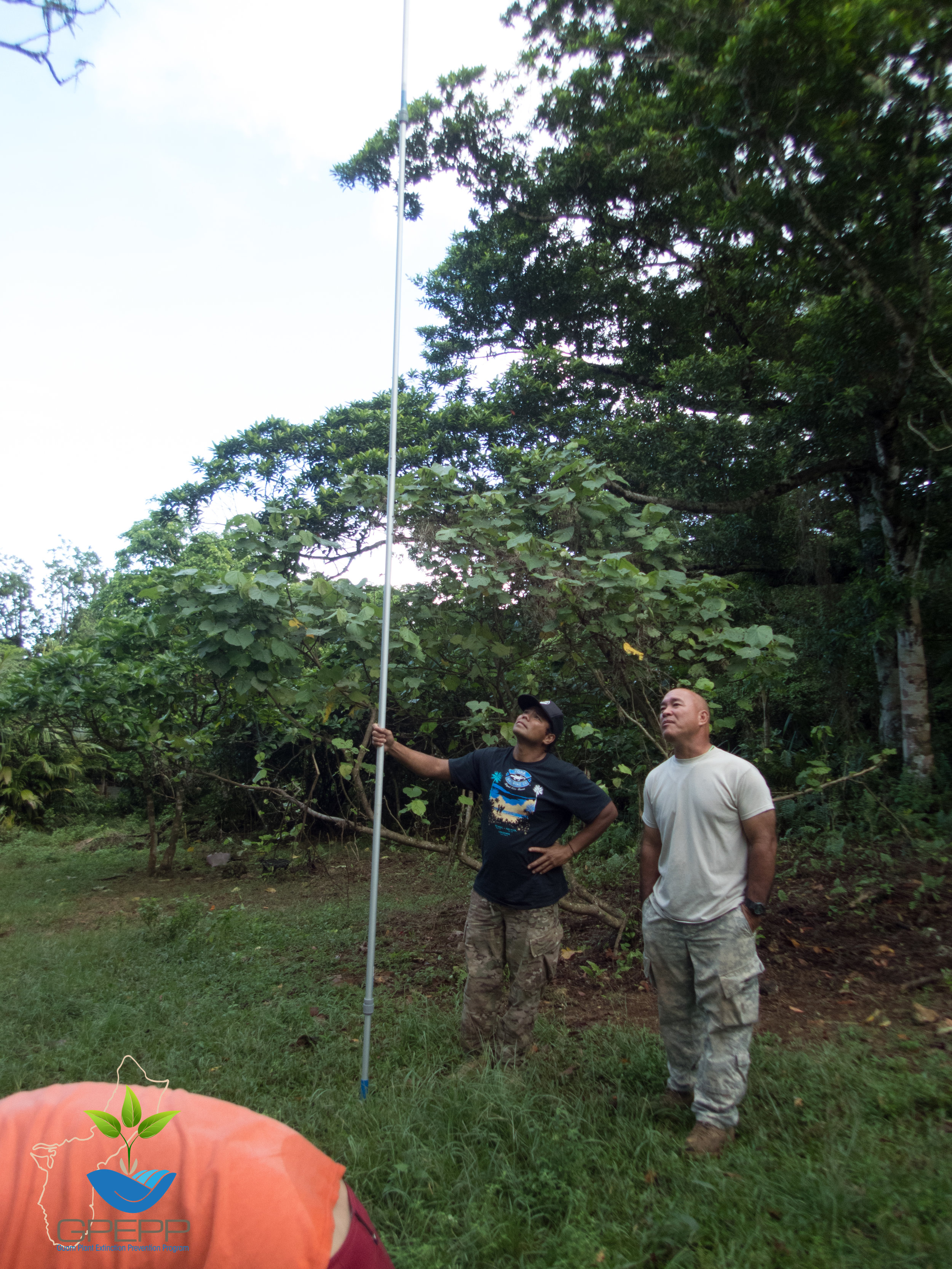 Joe (with the leaf picker) and James looking at a large  Serianthes.