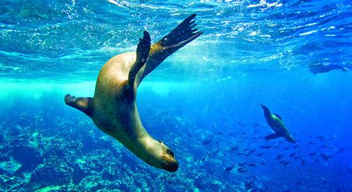 UnderwaterGalap1.jpg