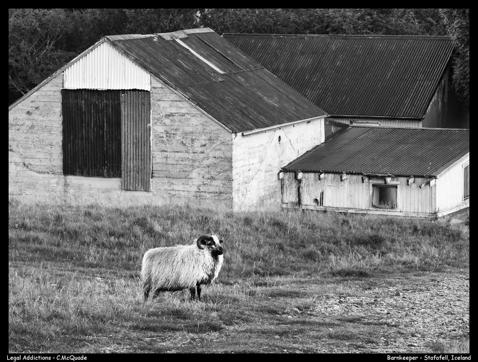 sheep%2Band%2Bold%2Bbarn-.jpg