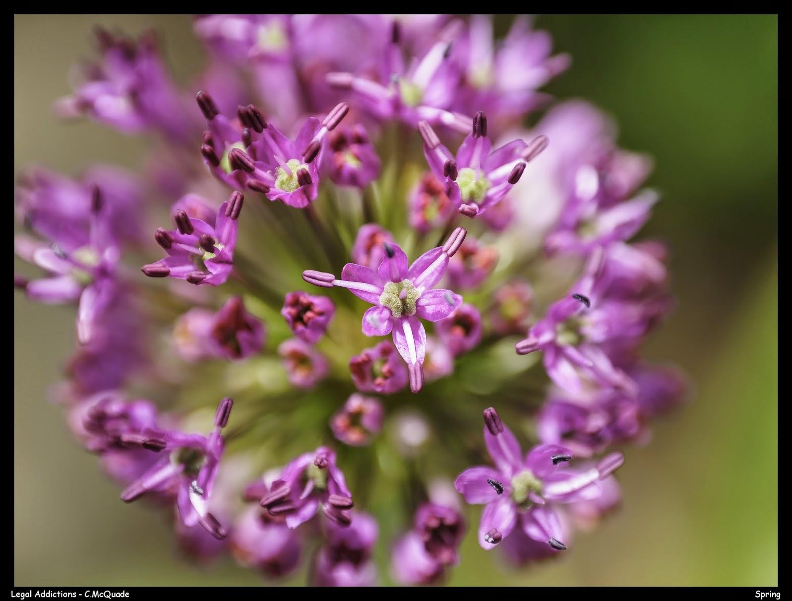 spring+flower+-+color-20142431.jpg