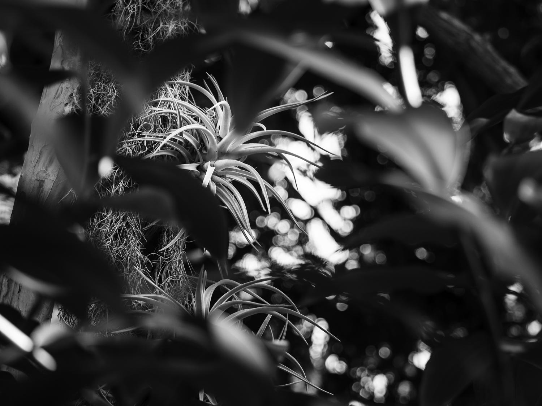 Bromeliads - aka air plants