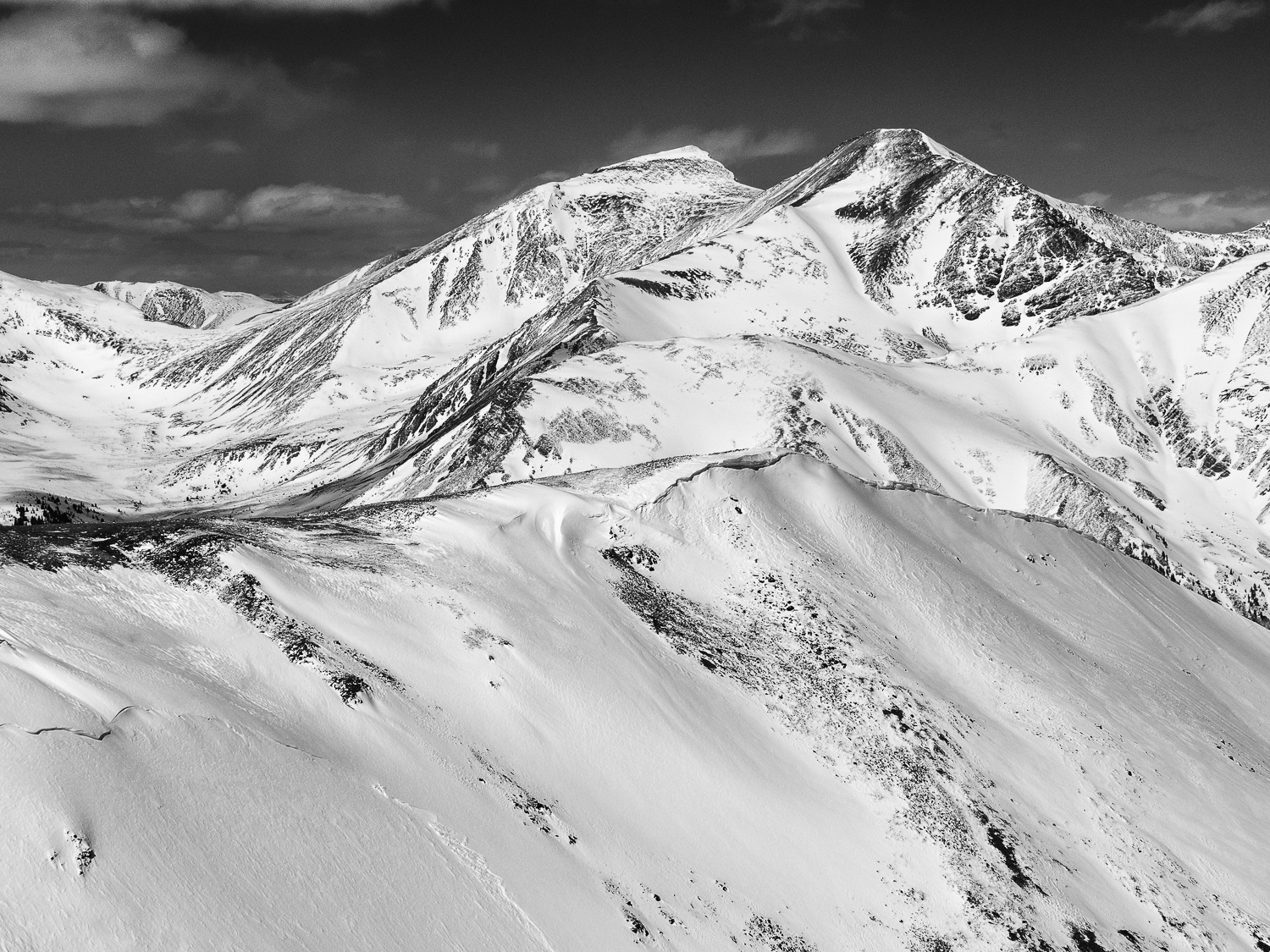 Torreys and Grays
