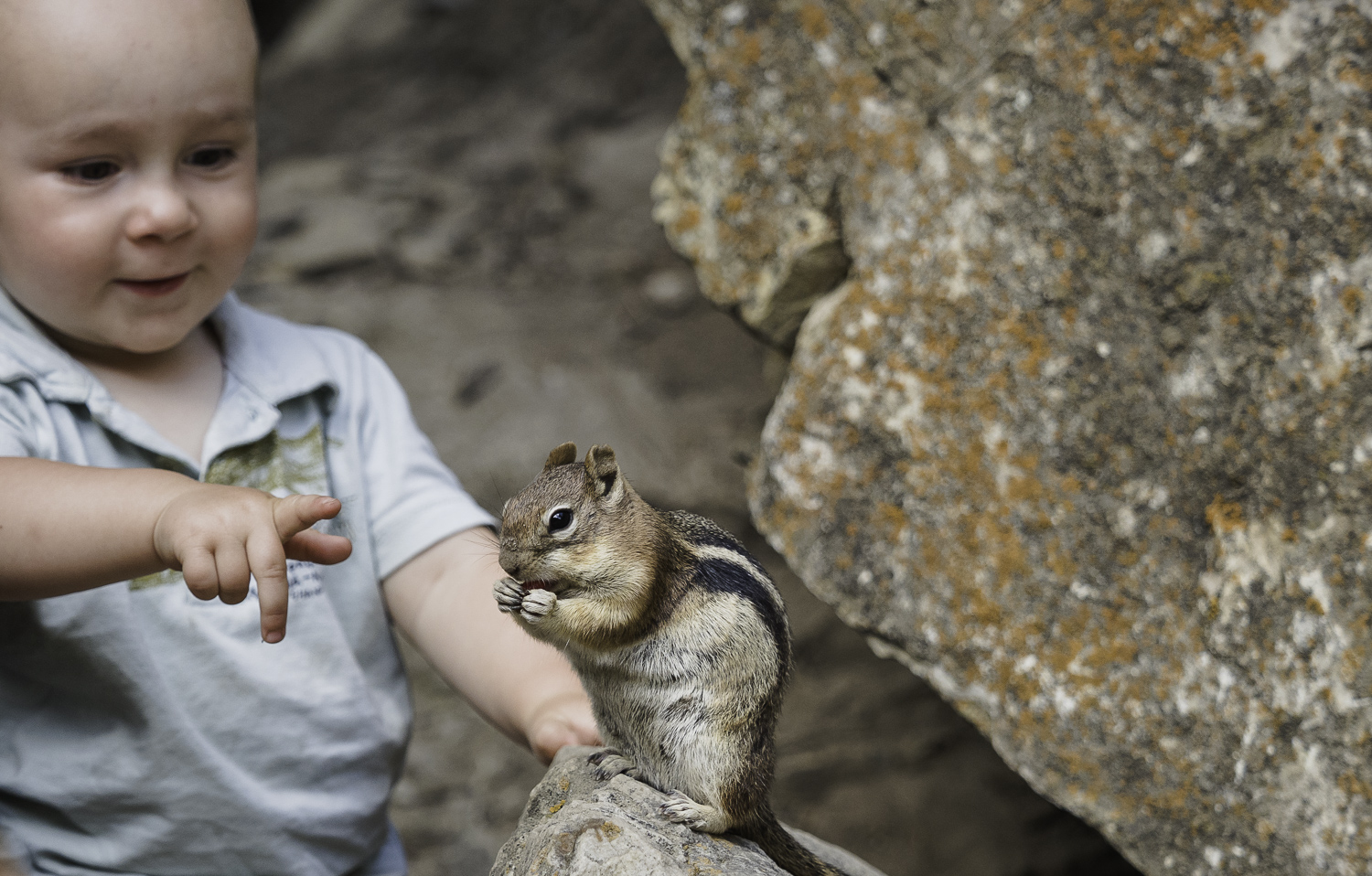 Feeding Chipmunks