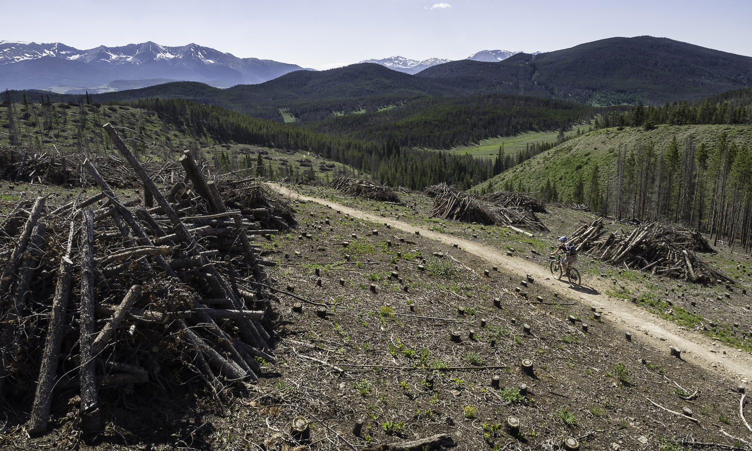 Beetle Kill Clearings - Colorado Trail: Segment 6