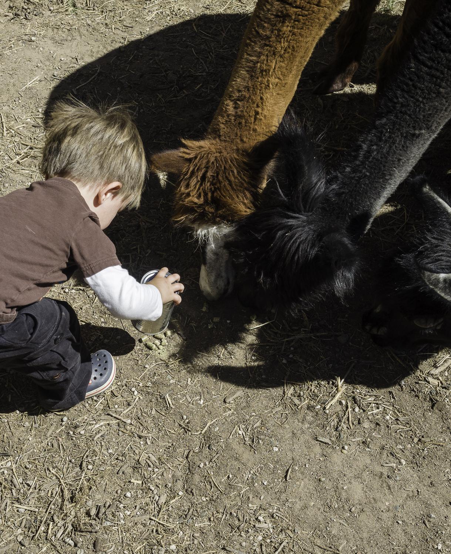 Alpaca Treats - Bluefly Farms - Peralta, NM