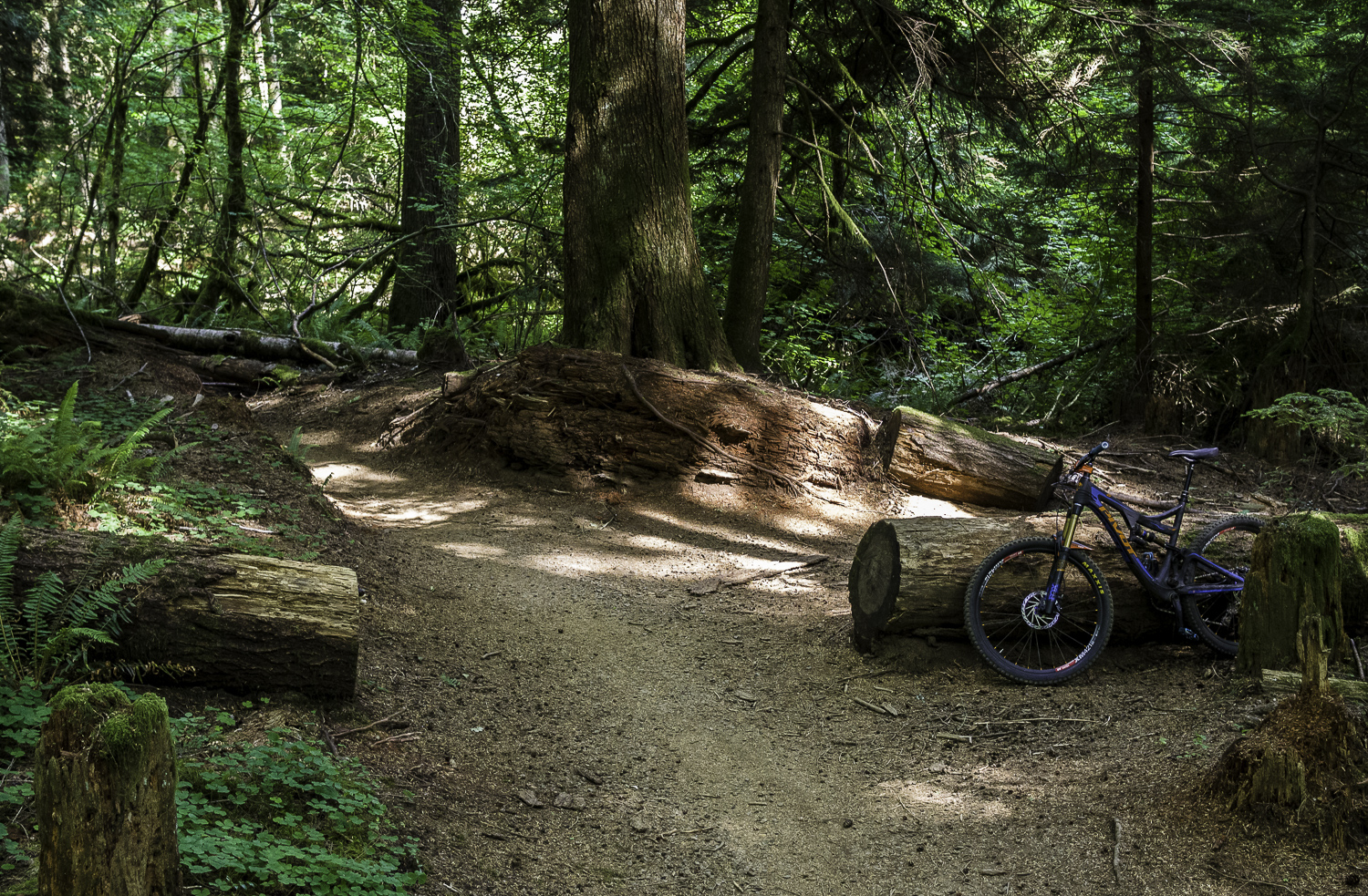 Quid Pro Flow Trail - Sandy Ridge, OR