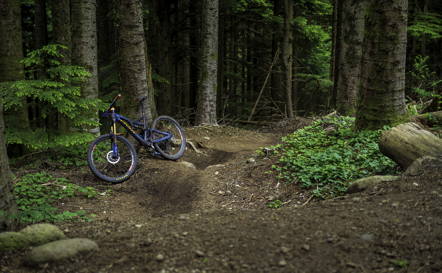 Predator Trail - Tiger Mountain, WA