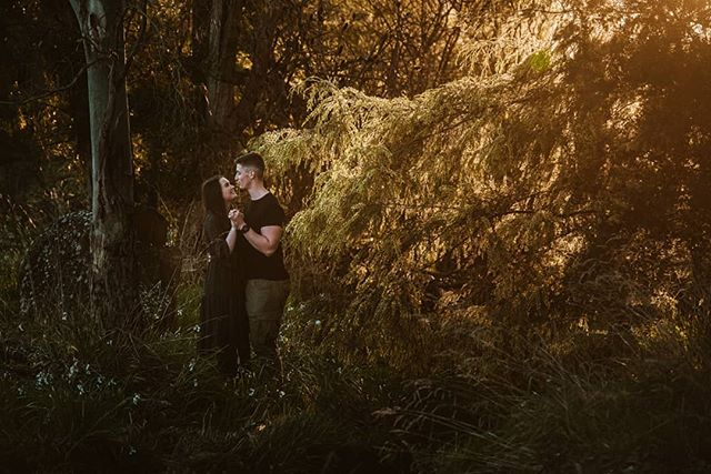 I was excited to find a wattle tree still in bloom with some beautiful back light. Place a cute couple ❤ @georgiesherriff . . .  #launcestoncouplesphotographer #launcestonweddings #wattletree #wattle #tasmaniaphotographer #tasmanianweddingphotographer #tasmania #instatasmania #tassie #couplesession #couplesinlove #launcestonphotographer #meghannmaguirephotography