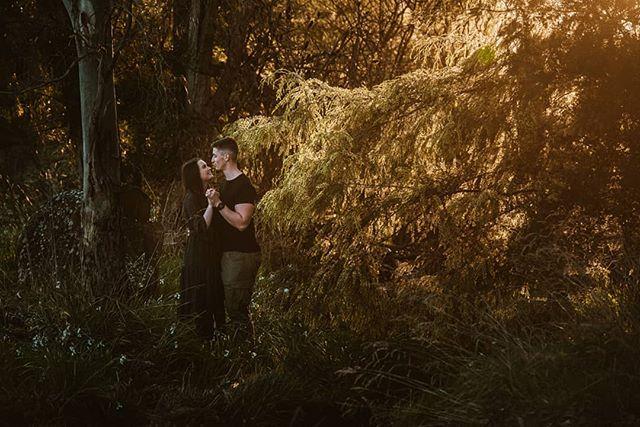 I was excited to find a wattle tree still in bloom with some beautiful back light. Place a cute couple ❤ @georgiesherriff . . .  #launcestoncouplesphotographer #launcestonweddings #wattletree #wattle #tasmaniaphotographer #tasmanianweddingphotographer #tasmania #instatasmania #tassie #couplesession #couplesinlove #launcestonphotographer #meghannmaguirephotography