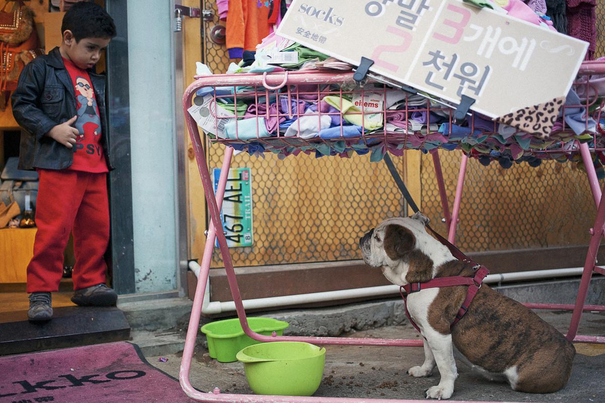 Dog and Boy in Seoul