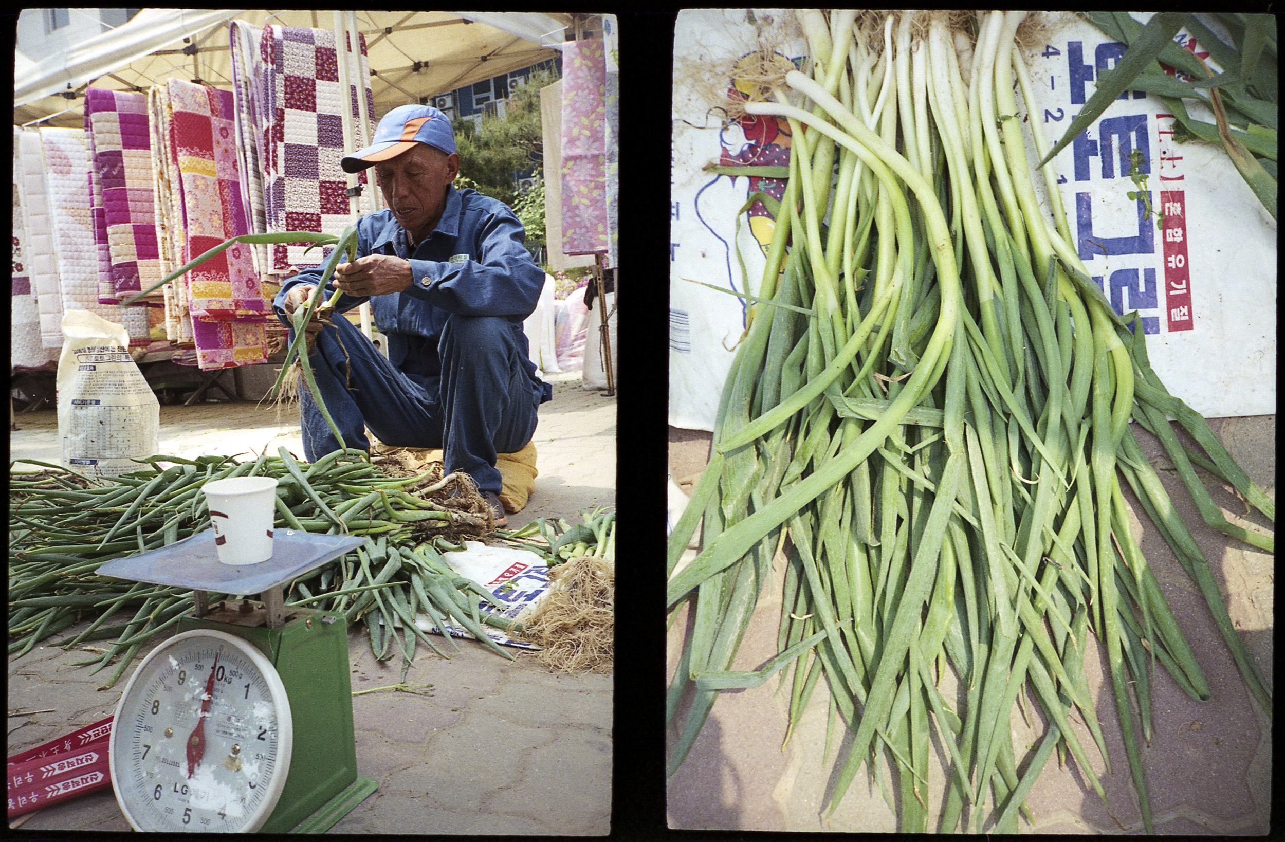 Scallions For Sale