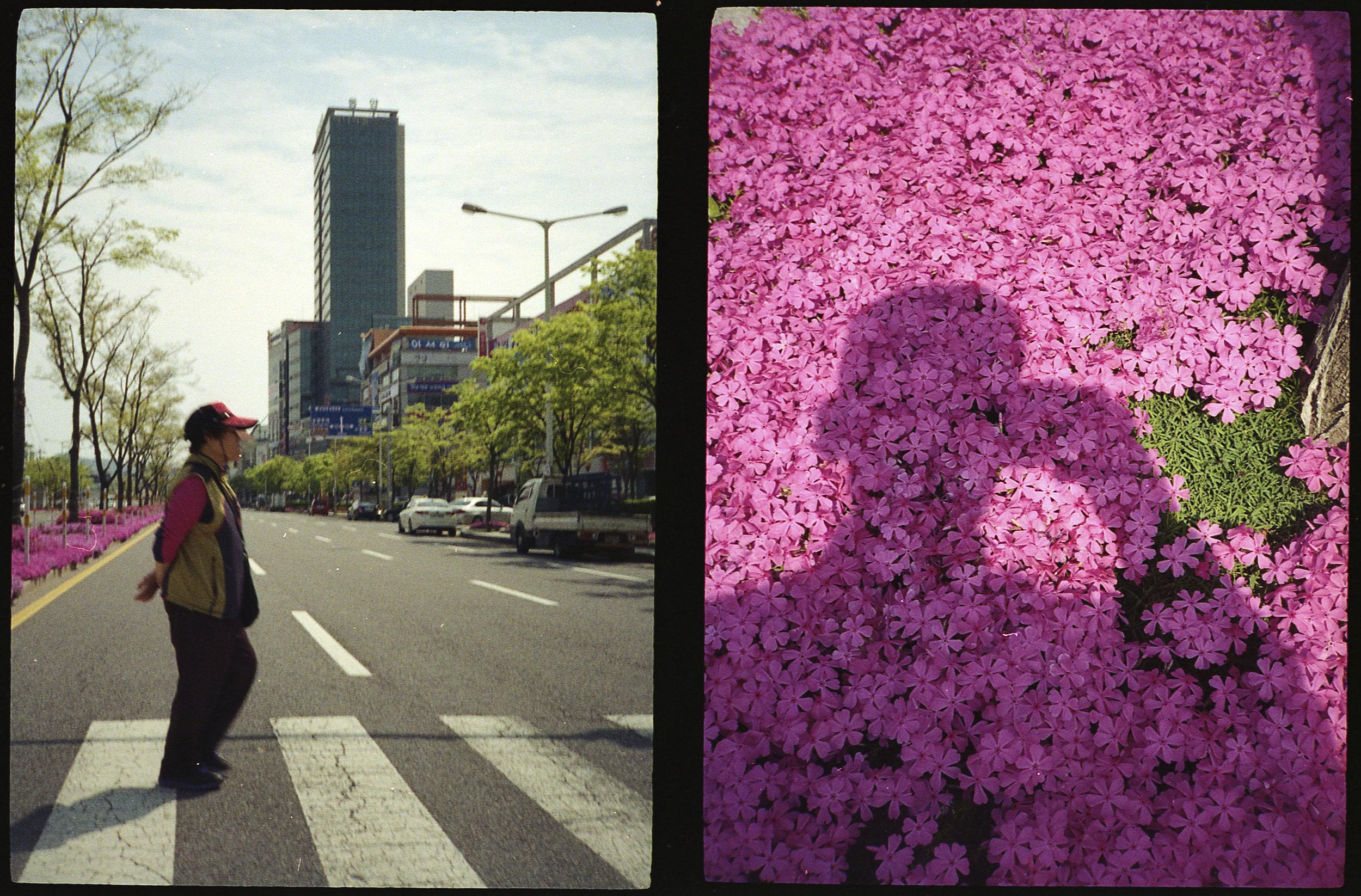 Crosswalk and Beautiful Flowers