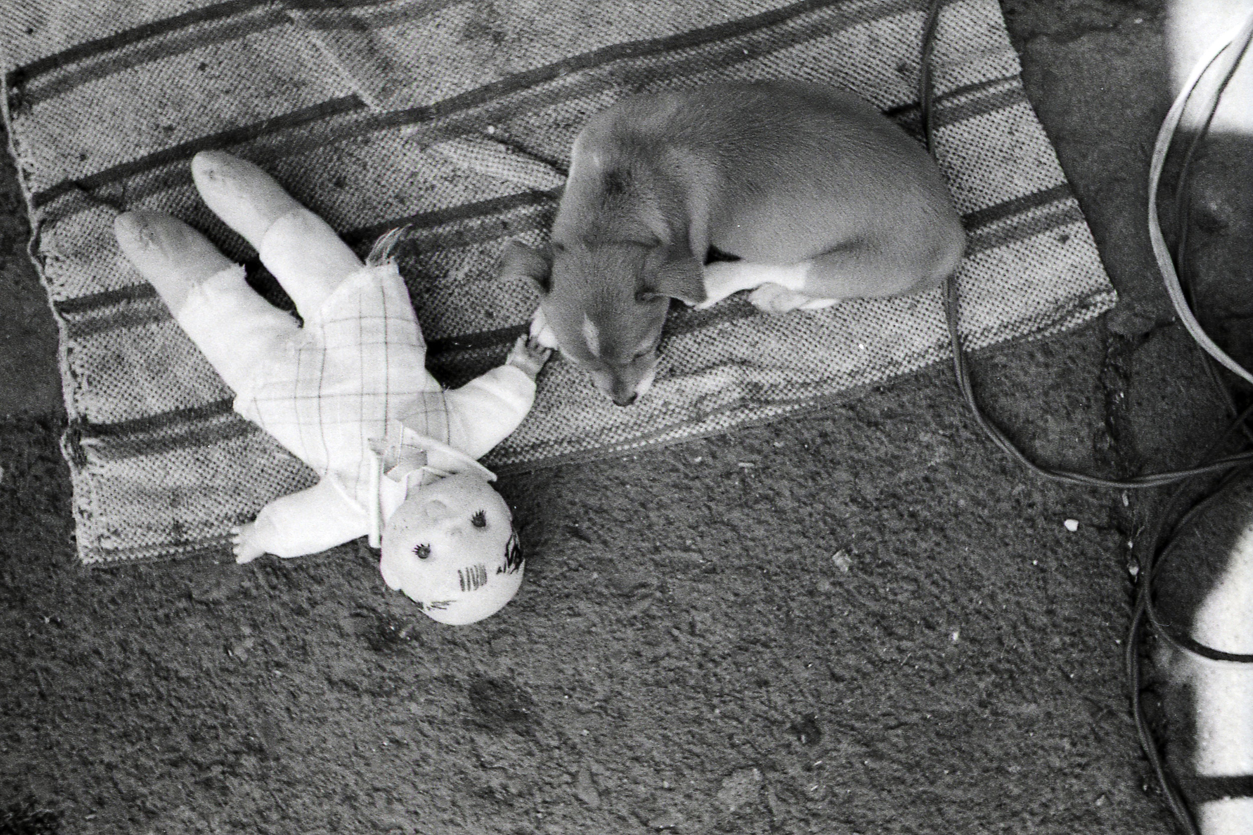 Puppy and Doll