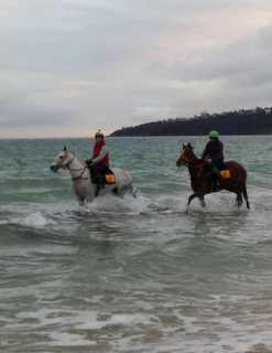 Lucciola and Real Jazz at Safety Beach this morning. The beach breaks up the training routine giving the horses both mental and physical benefits. Lucciola runs at Flemington tomorrow and Real Jazz at Echuca on Monday.