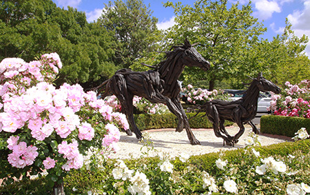 Karaka Sales Ring is located just 30mins south of Auckland