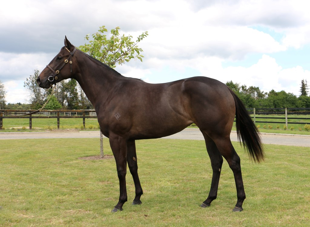 Lot 93 bought by Feek Racing on Day 1 of the Karaka R2R Sale