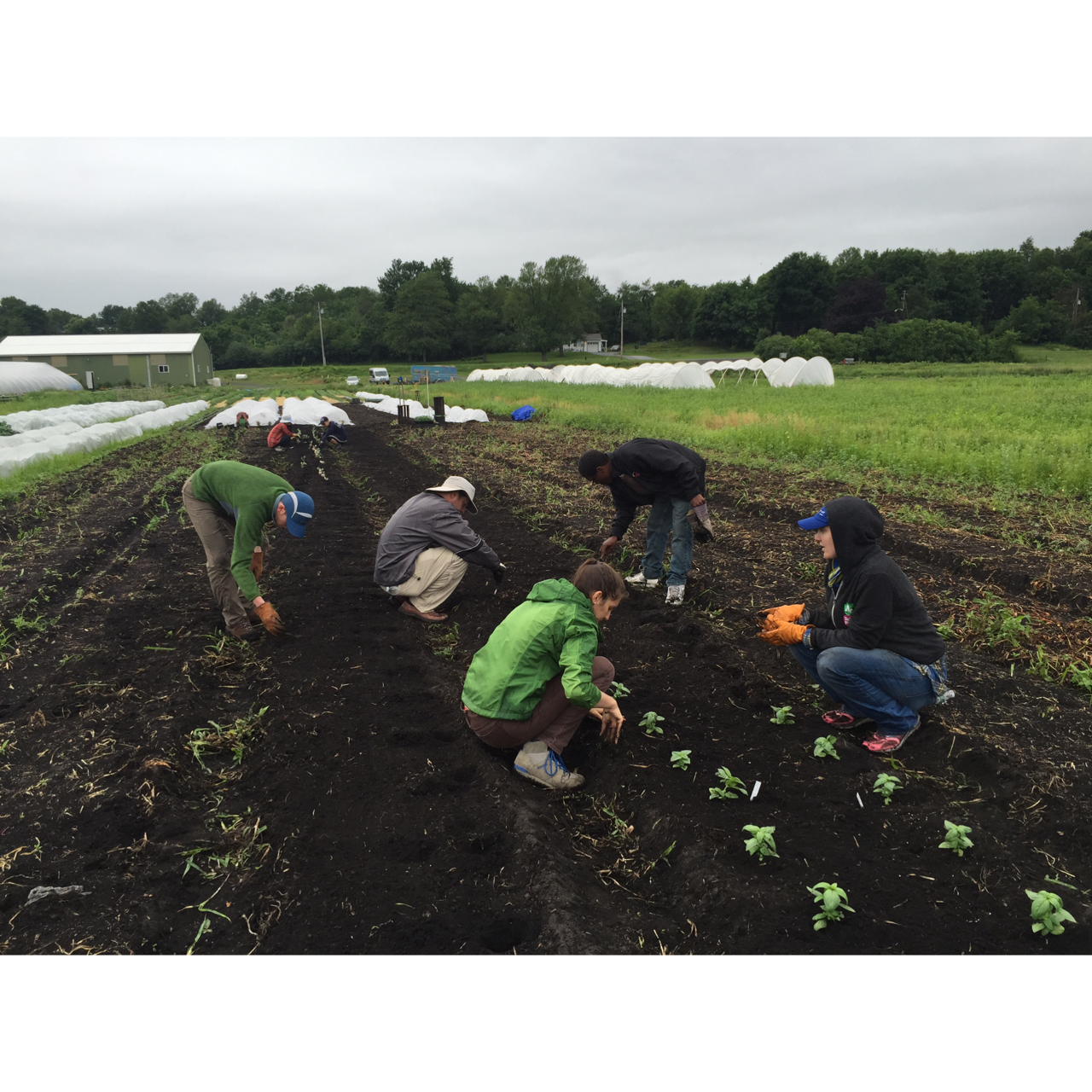 2015 growing soils - snug - Melissa Brzuszek 3.PNG