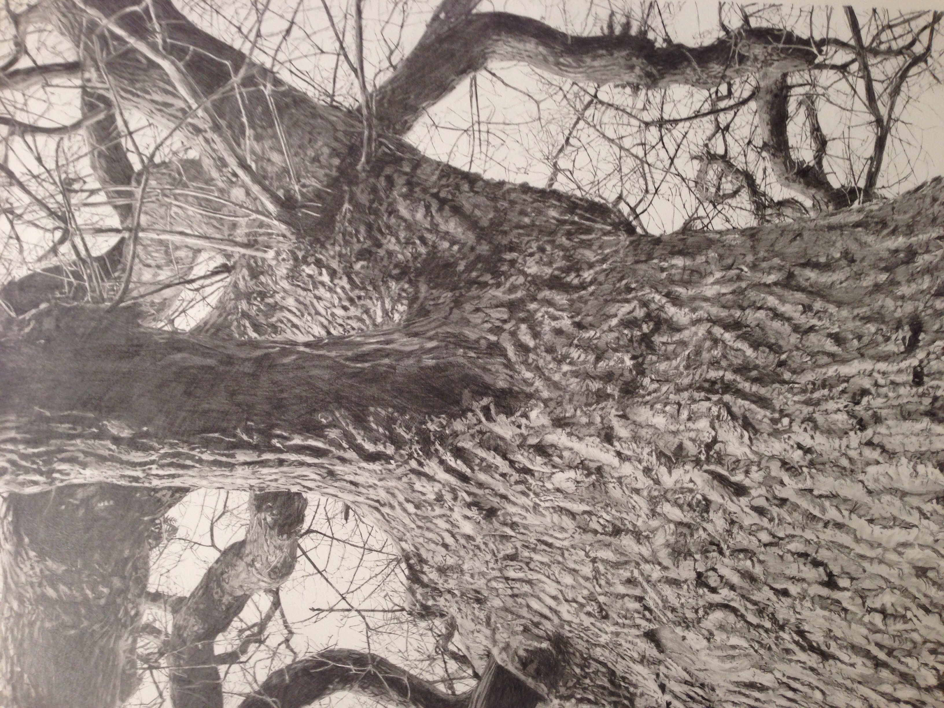 Detail of Vertical Panorama: Oak Tree by Hannah Downing
