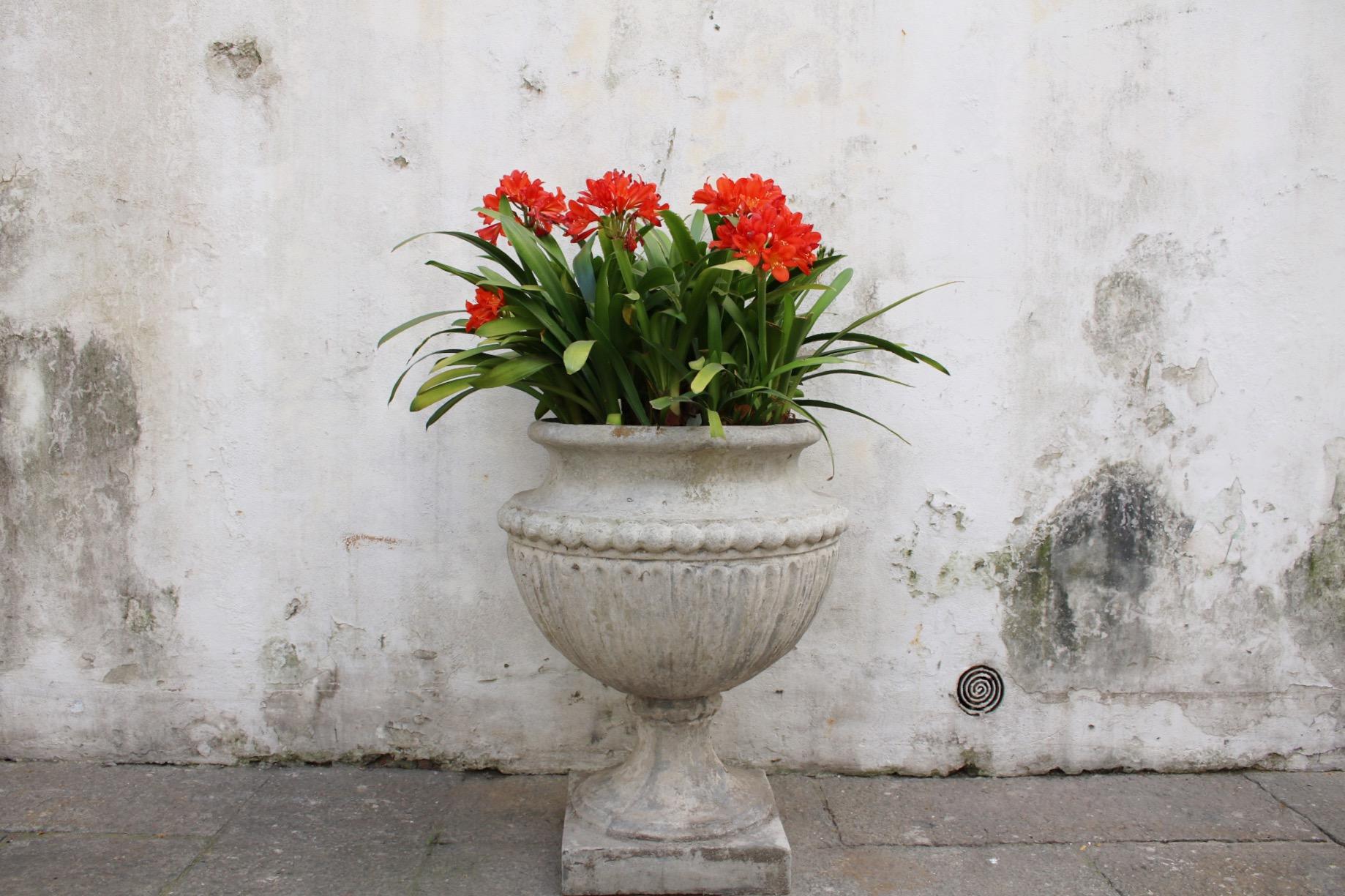 Flowers in Montevideo