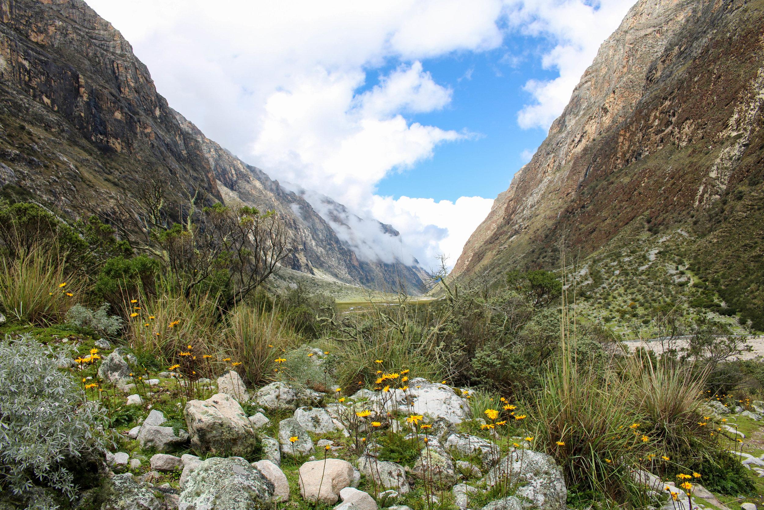 Wildflowers in the Valley, Peru
