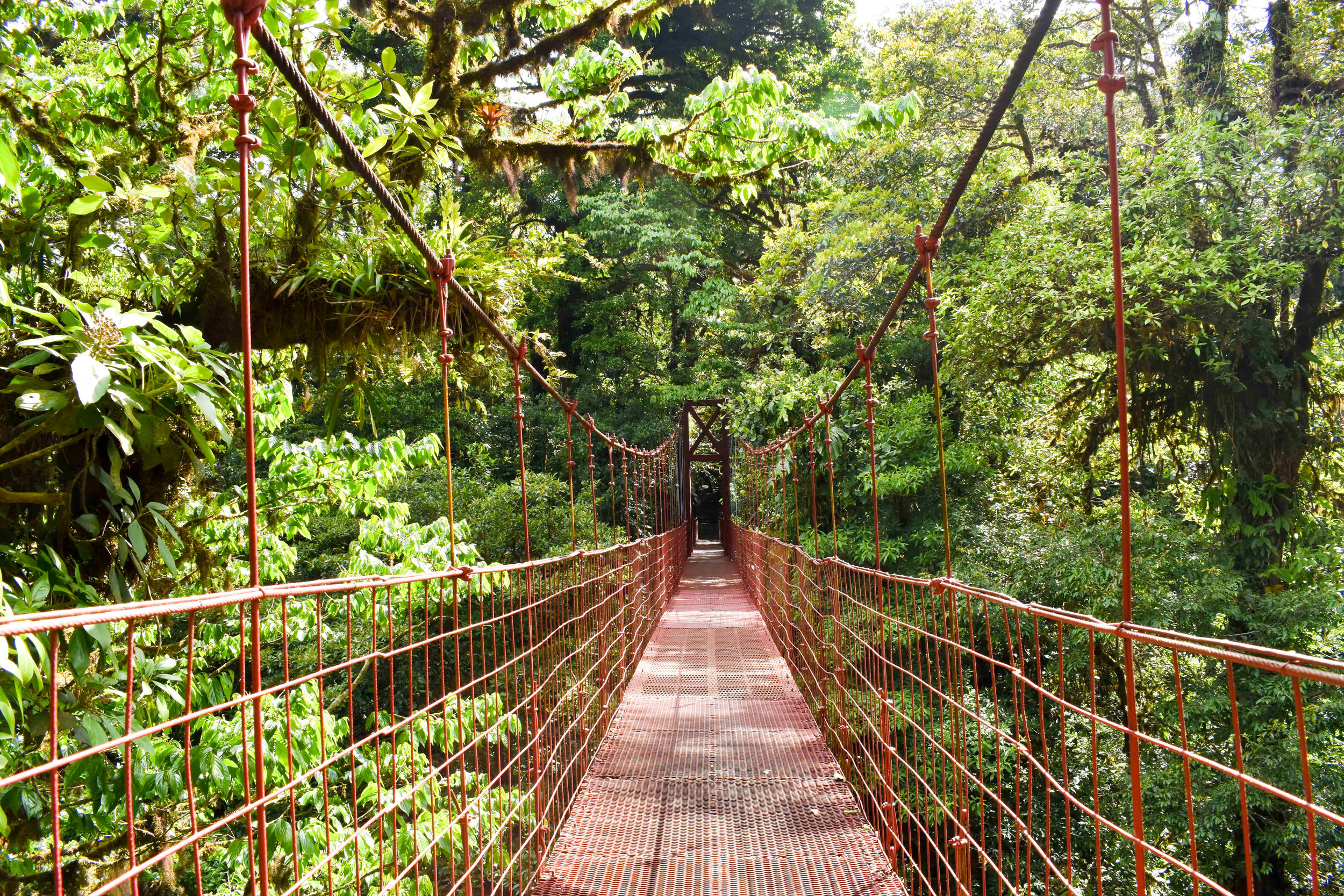 The Red Suspension Bridge in Monteverde's Cloud Forest Reserve, Costa Rica