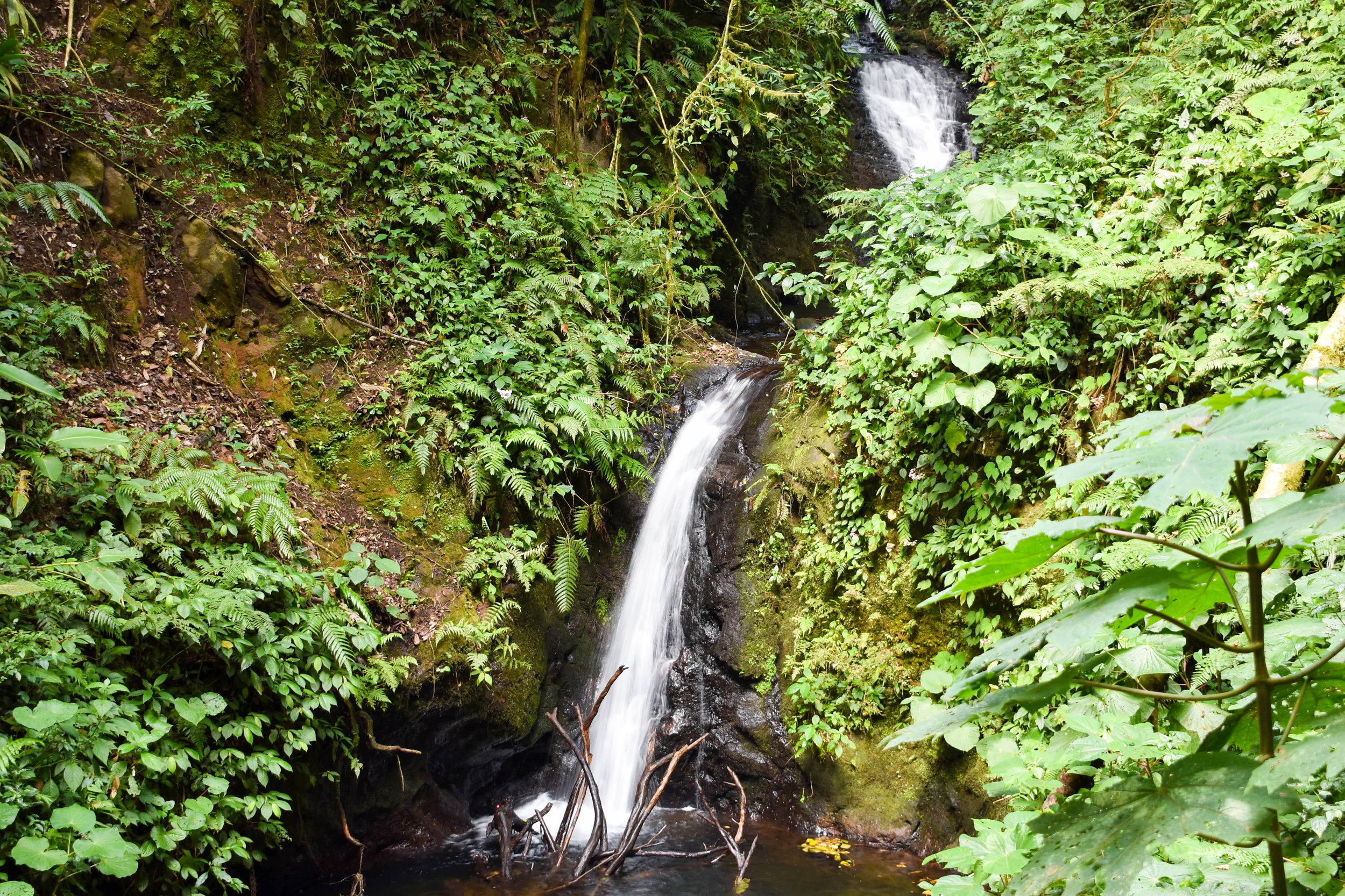 The Waterfall in Monteverde's Cloud Forest Reserve, Costa Rica