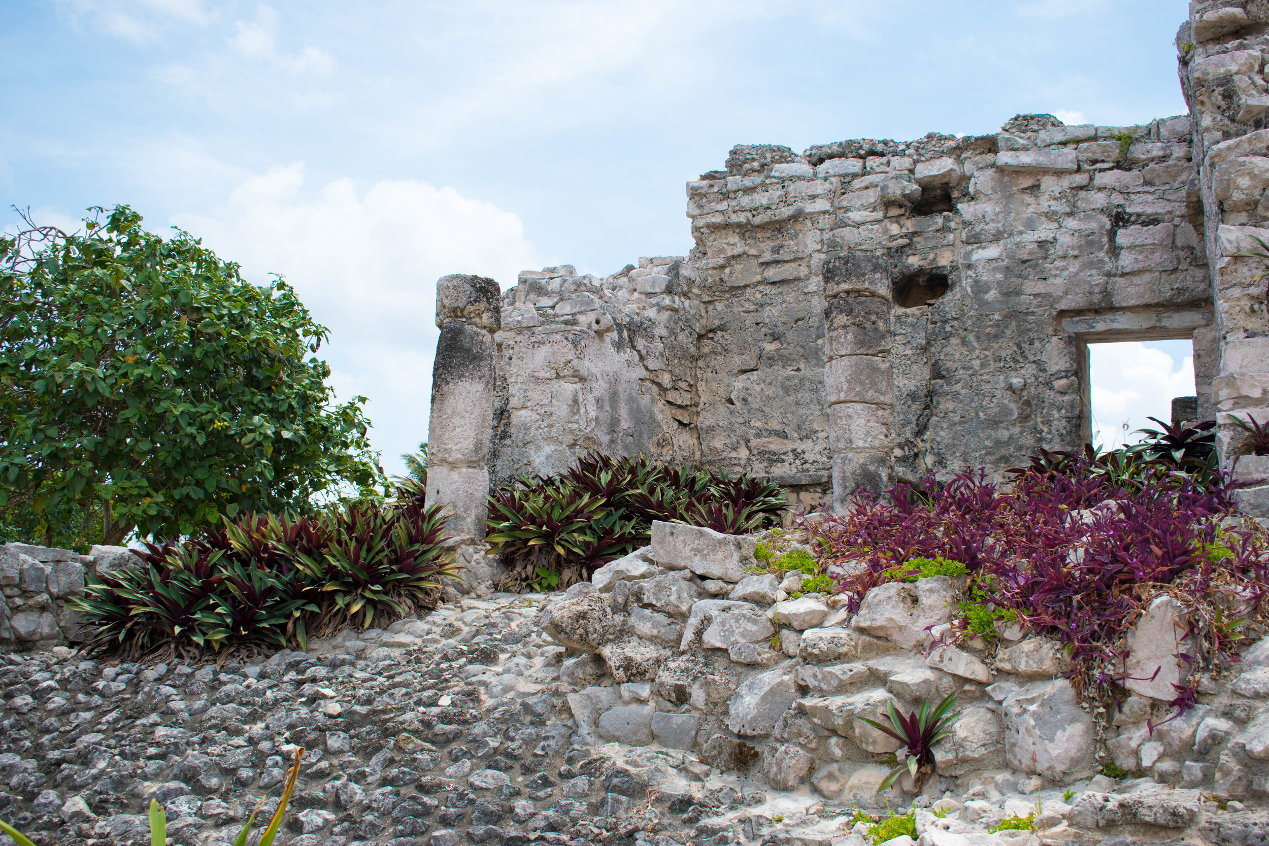 Plants and Stone at Tulum in Mexico