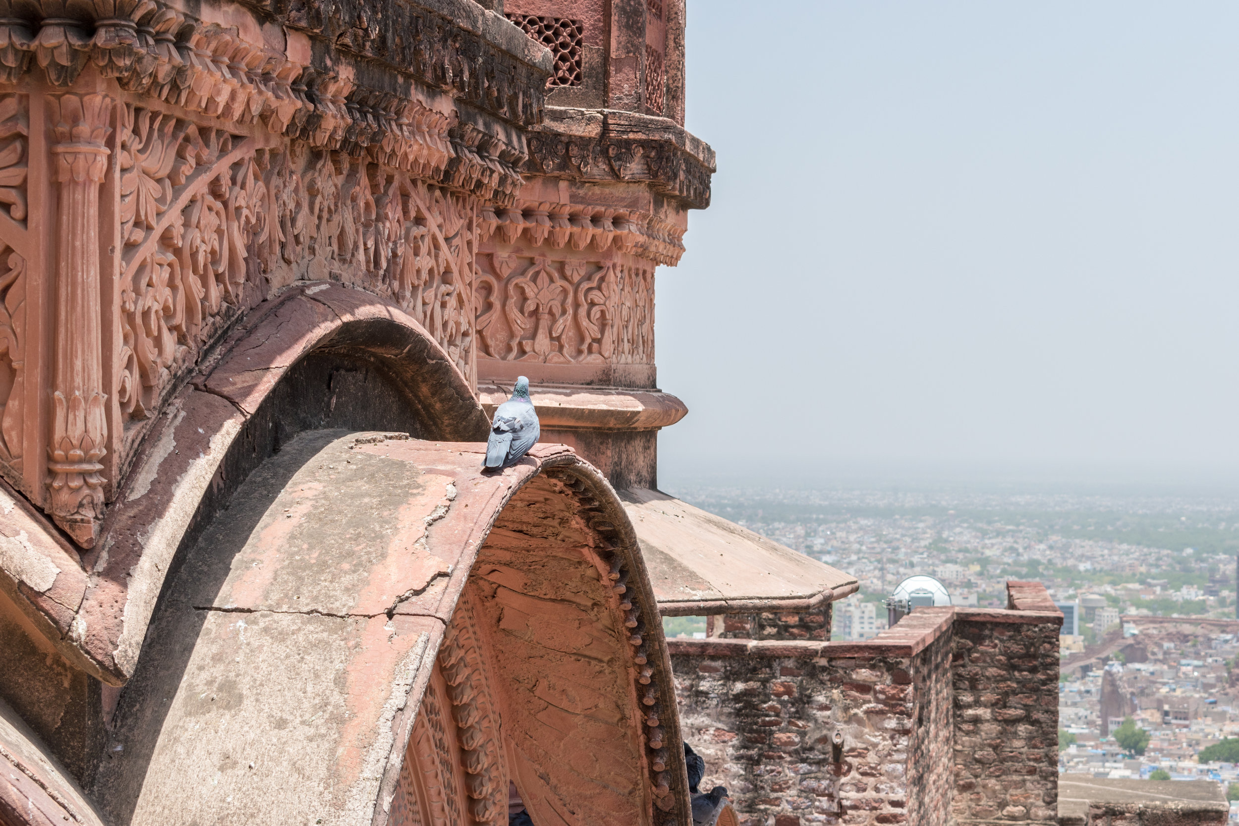 A Pigeon Admires The View From Mehrangarh Fort in Jodhpur, India