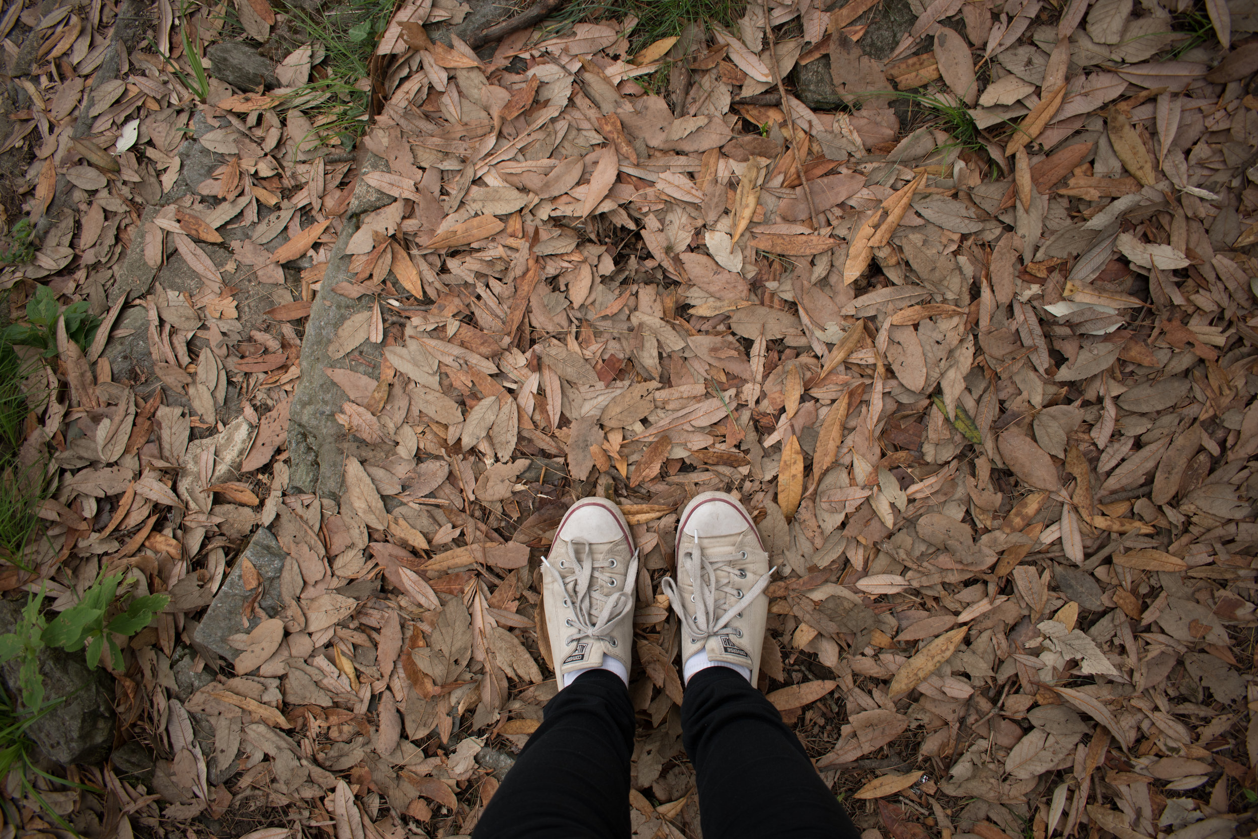 Battered Old Converse and Fallen Leaves At Viceroy Lodge in Shimla, India