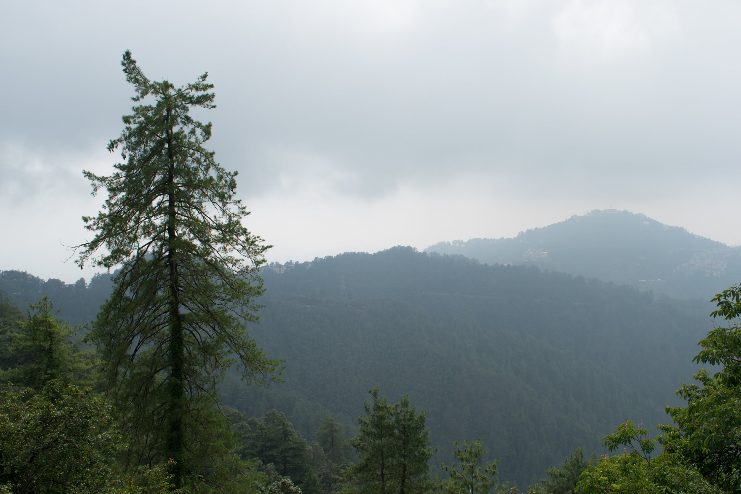 Overlooking The Green Hills From Shimla, India