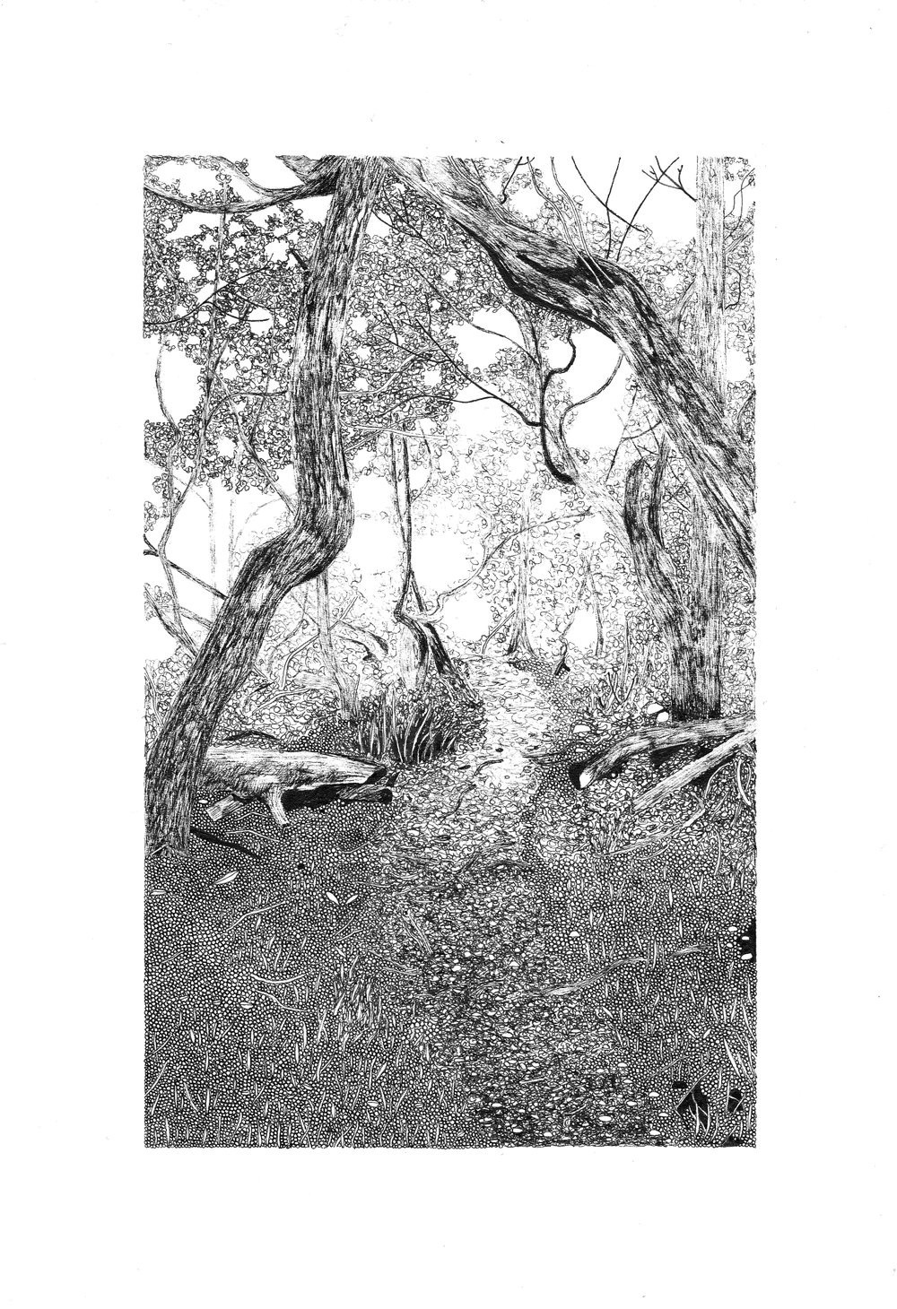 Twisted Trees in Tierra del Fuego, 21cm x 14.9cm, pen on paper