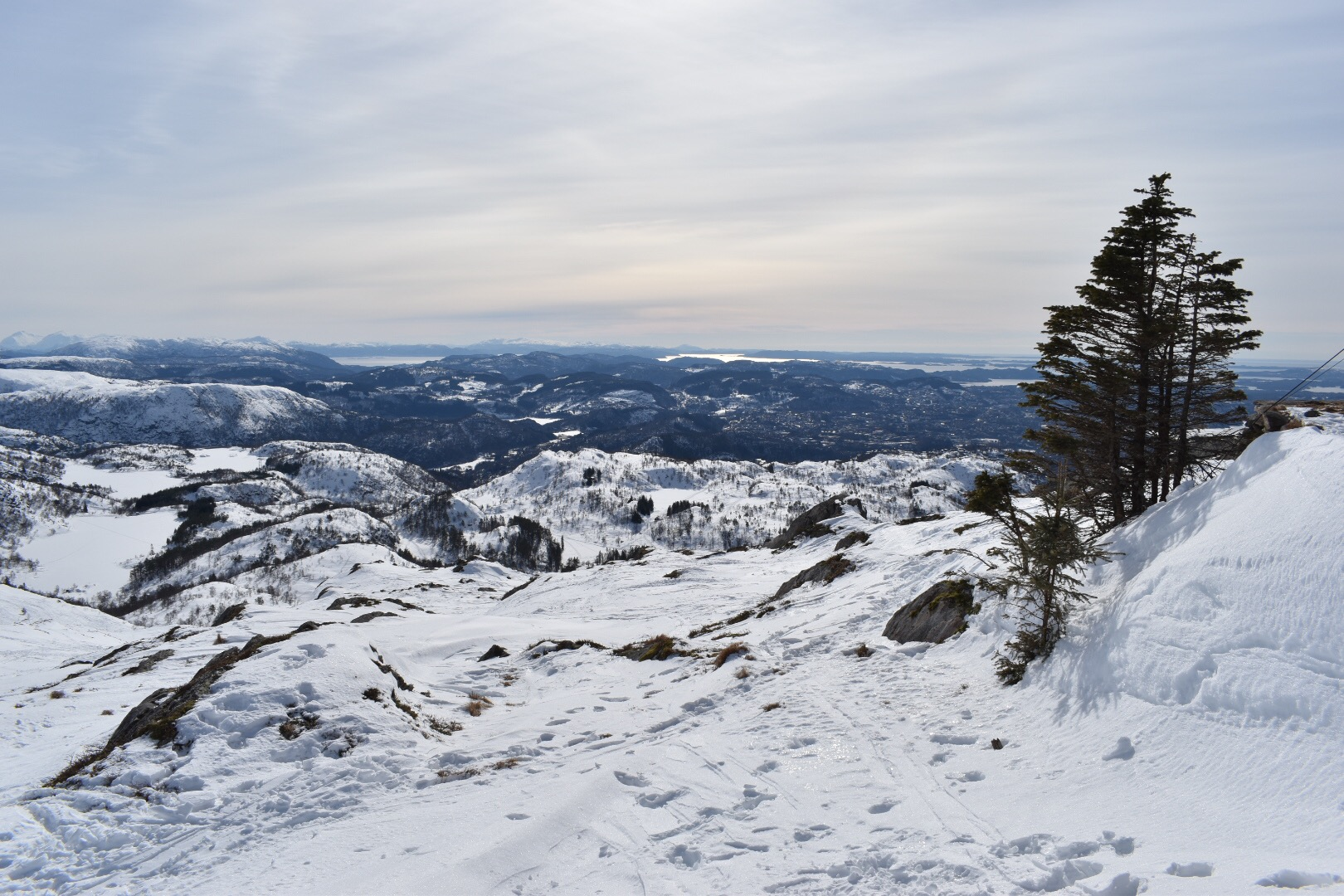 Distant Fjords and Trees on Top of Mount Ulriken in Bergen, Norway