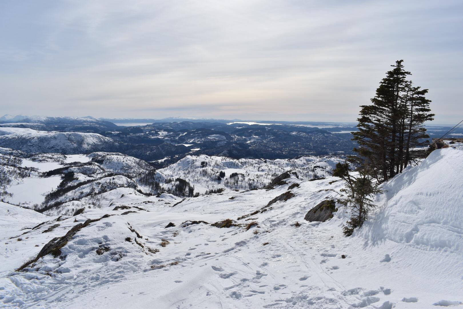 Distant Fjords and Trees on Top of Mount Ulriken in Bergen, Norway