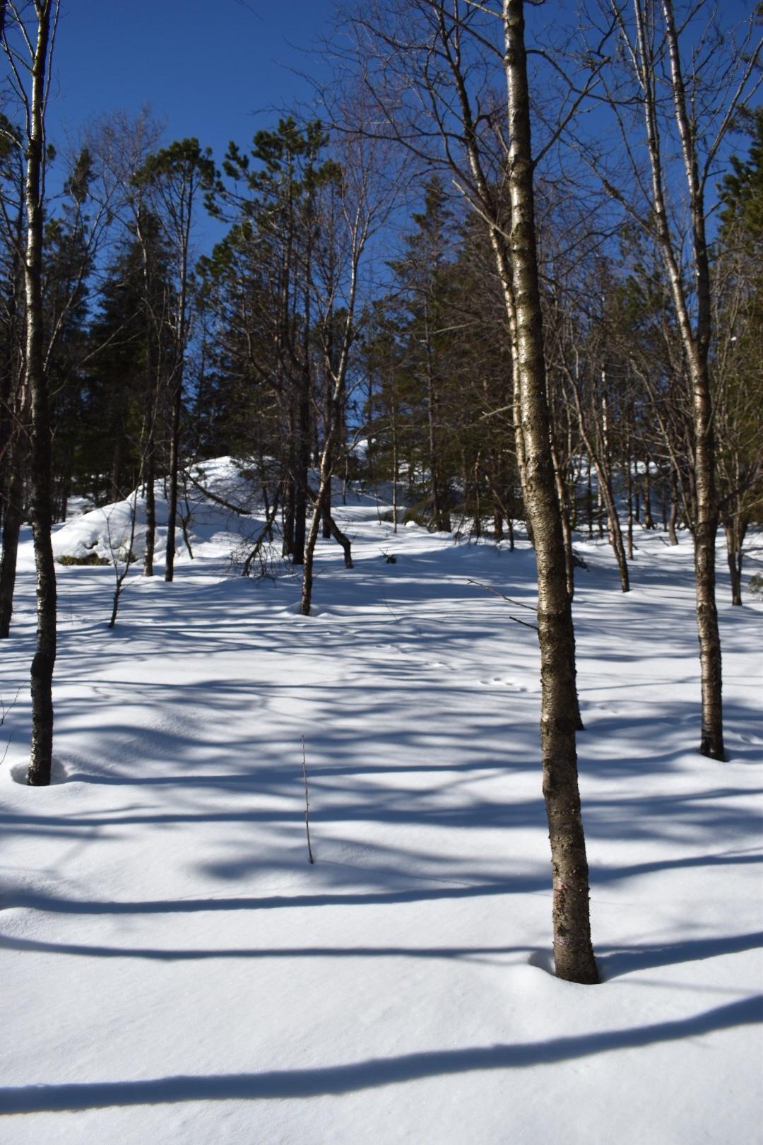 A Winter Wonderland On Top Of Mount Floyen in Bergen, Norway