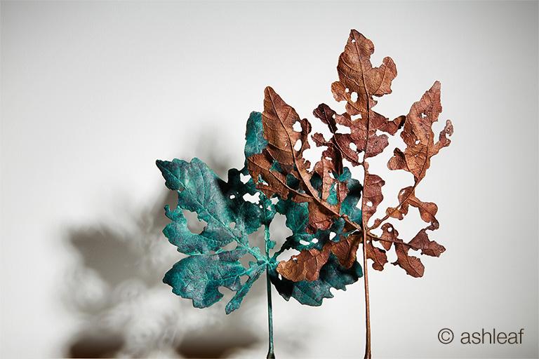 Leaves by Ashleaf