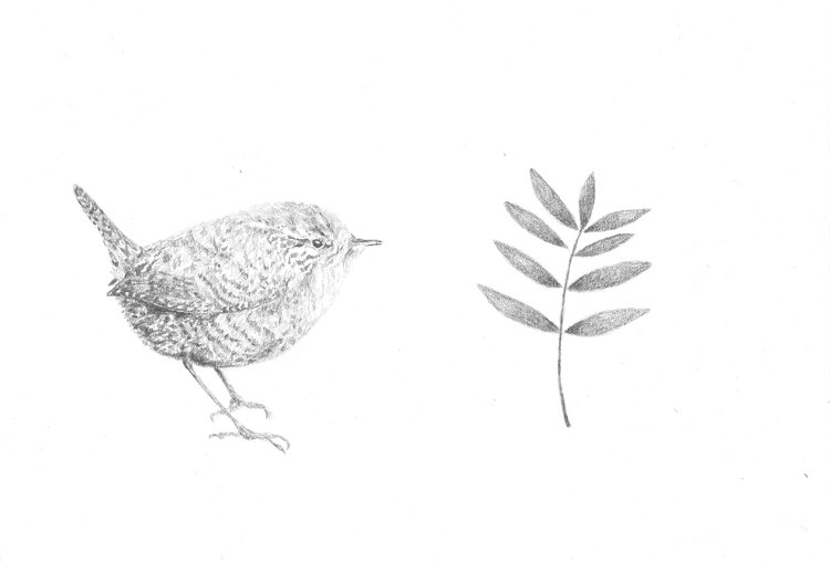 Wren and Sprig of Leaves by Claire Leach