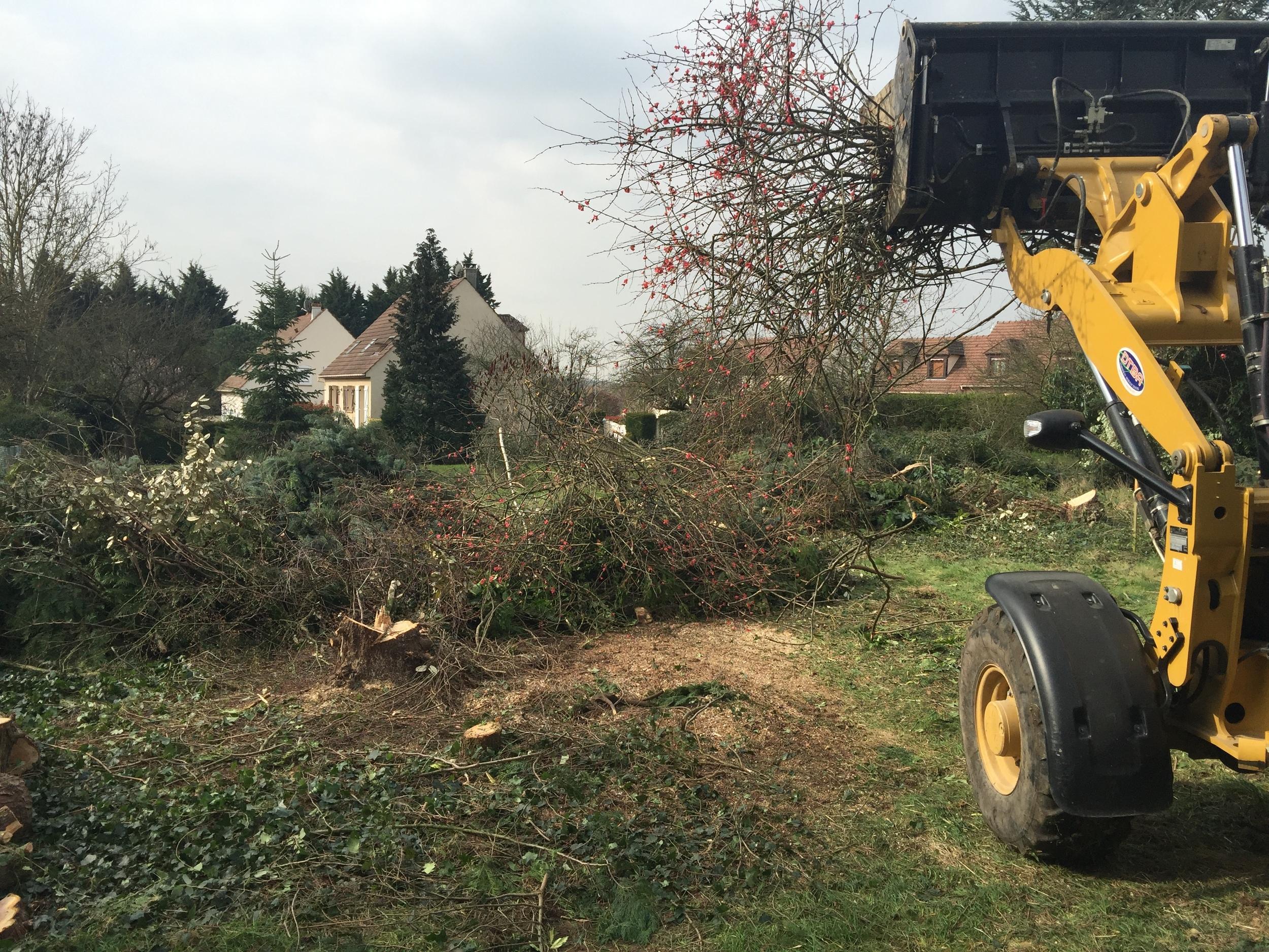 Defrichage du terrain avant démolition