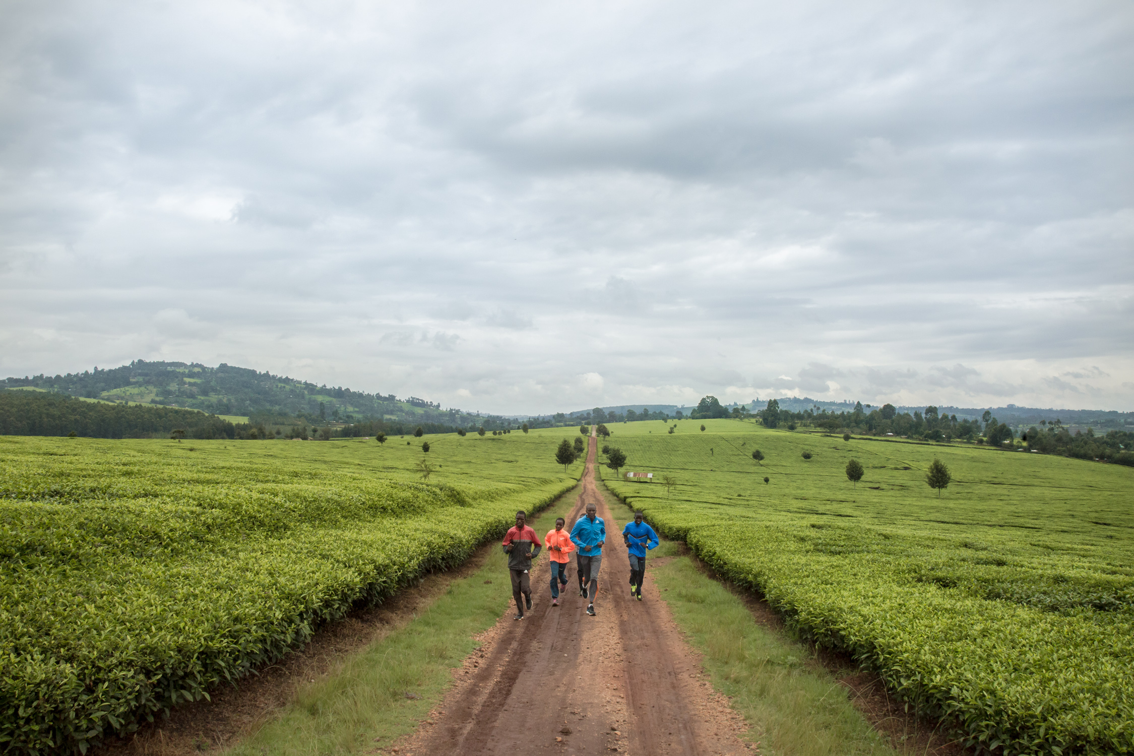 Rose Chelimo and her team of marathon runners training in the Kenyan tea fields.