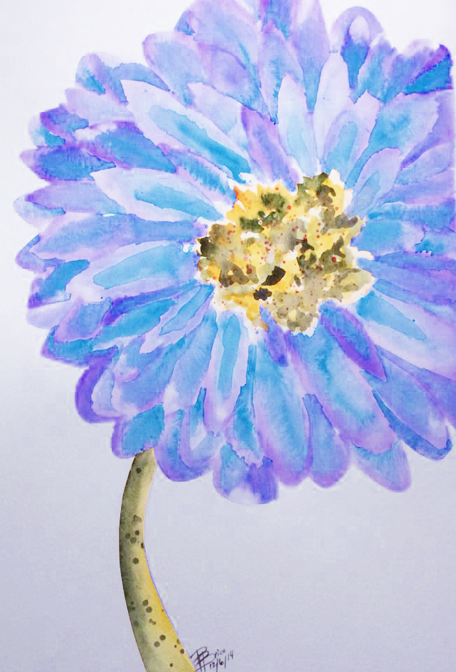 Gerber Daisy - Purple/Blue