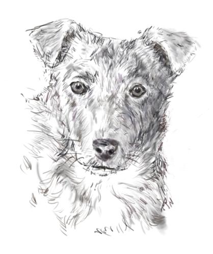 drawdog7.jpg